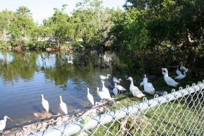Birds Line Up