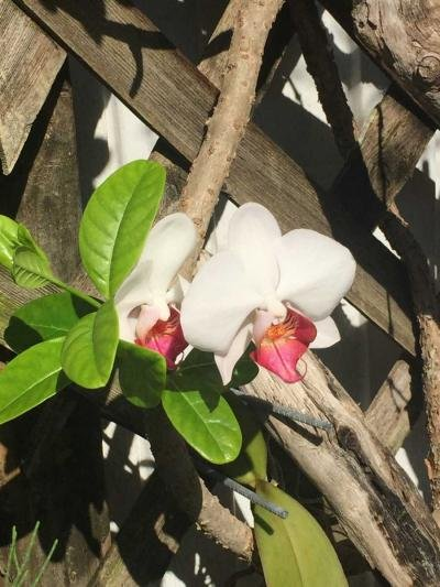 Orchids Galore