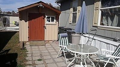 Patio Area/Shed