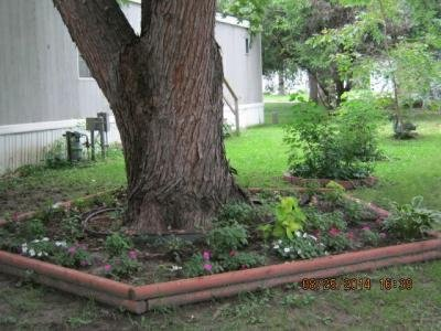Well established Trees and Beautiful flower gardens