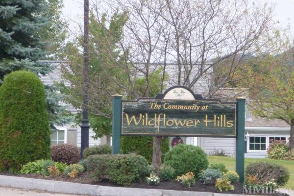 Welcome to Wildflower Hills