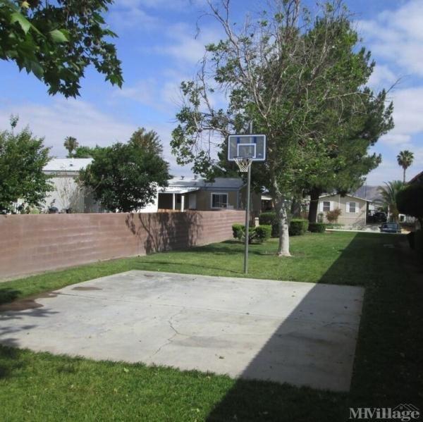 Baketball Court