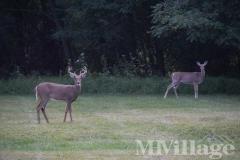 Photo 4 of 9 of park located at 18 Park Circle Washingtonville, NY 10992