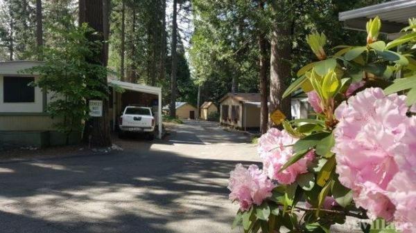 Photo of Bonanza Mobile Home Park, Pollock Pines, CA