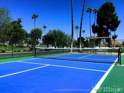 Pickleball Anyone