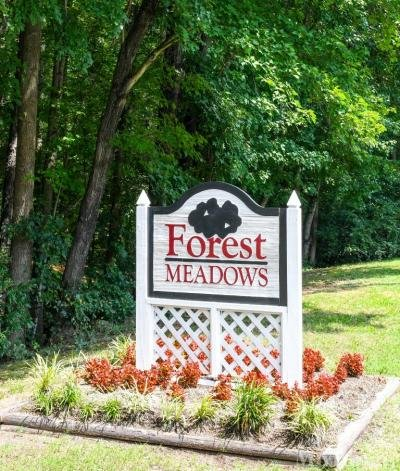 Forest Meadows