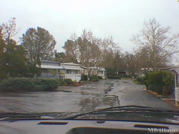 Photo of Live Oak Park, Kelseyville, CA