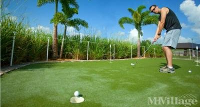 Rexmere Putting Green