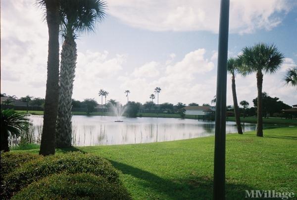 Our beautiful Palm Lake