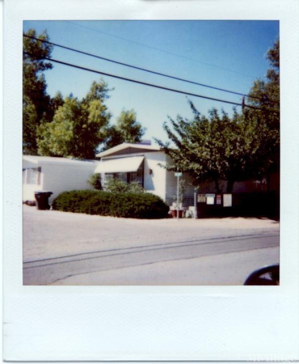 Photo of Shade Tree, Reno, NV